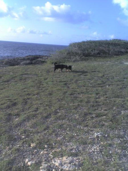Blacky à La Pointe des Châteaux en Guadeloupe