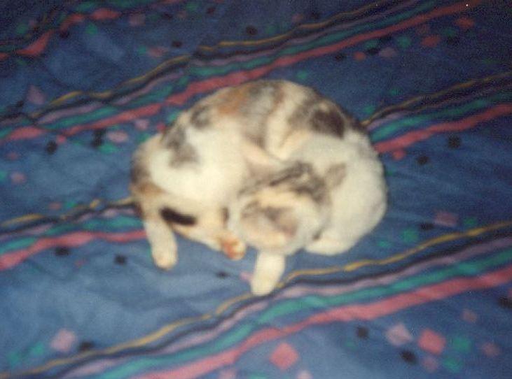 Charlotte sur mon lit