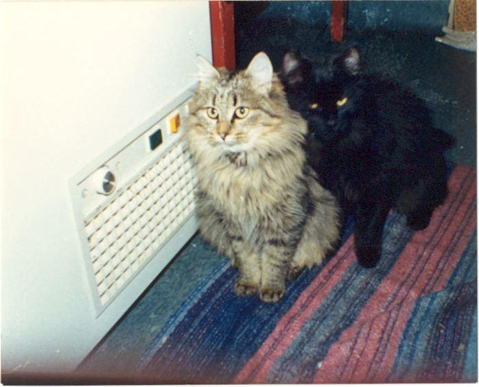 Bella et Bella