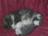 Nutz amis de Blacky et de la famille décédé le (samedi 5 avril) 2008 à 7h
