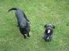 Blacky et Roxane