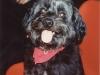 Blacky en 2001