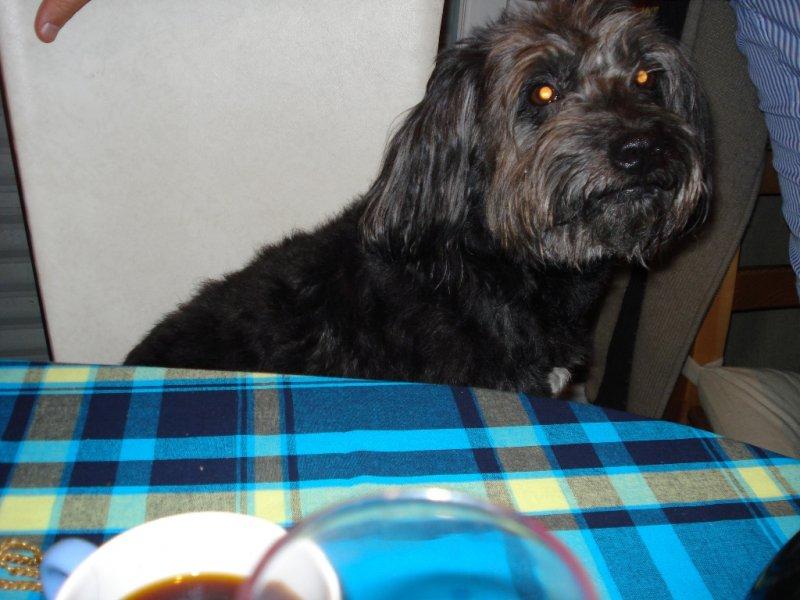 Blacky à table