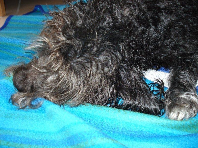 Blacky après le bain