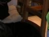 Blacky sur la chaise chez Fatima