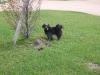 Blacky dans le jardin