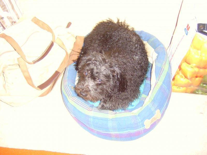 mercredi-22-novembres-2006-15