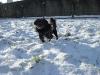 Blacky et la neige