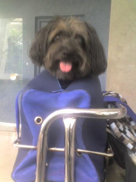 Blacky dans son sac de voyage