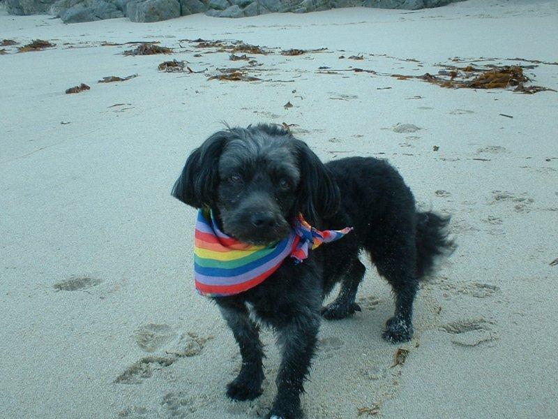 Blacky plage de Tréziens