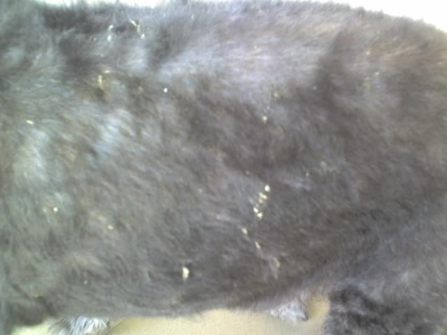 Blacky et son allergie