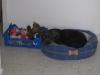 Blacky près de ses jouets
