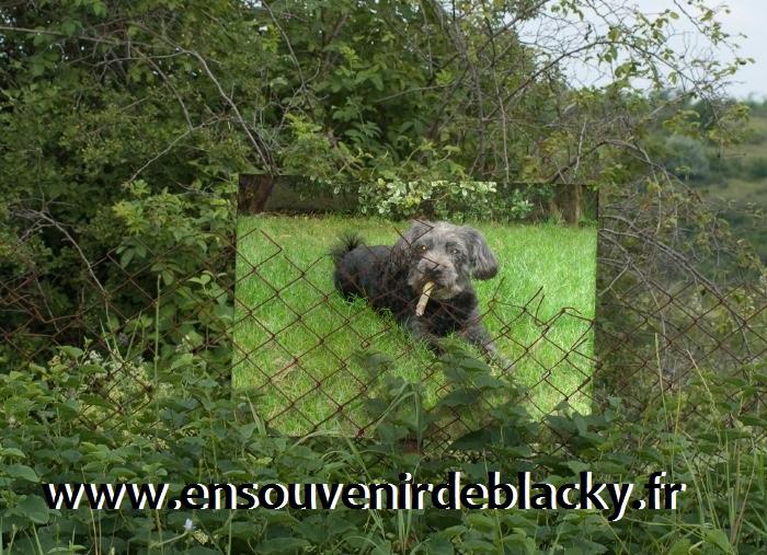 Site de Blacky :