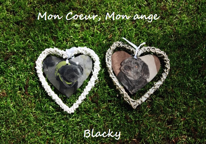 Mon coeur, Mon ange Blacky