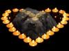 blacky-bougies