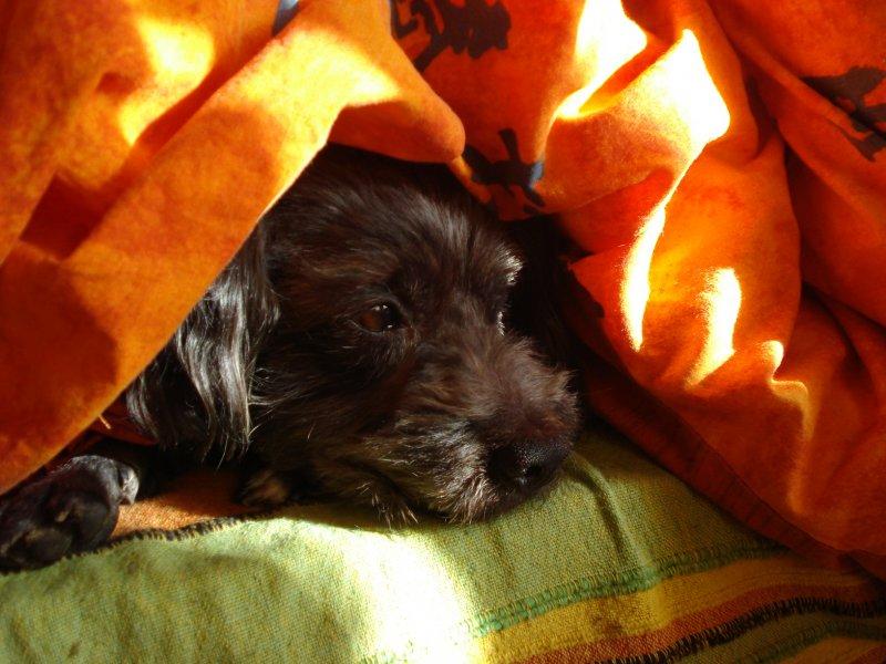 Blacky sur le canapé