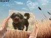 funnywow_480516ecc1c816d4